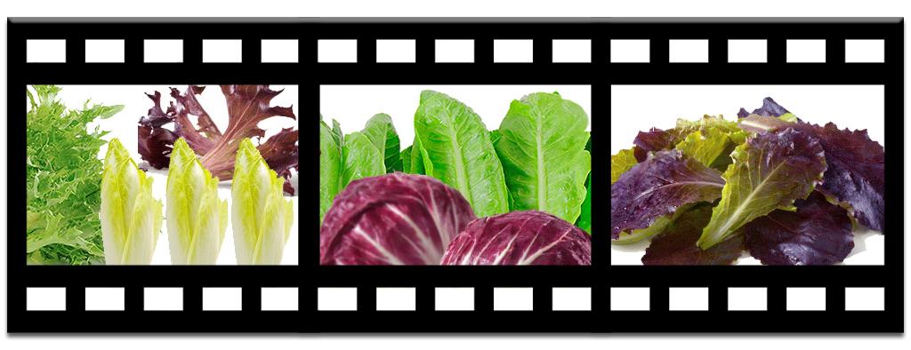 Salad-Plated